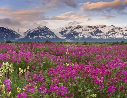 The Valley of Flowers Trek Experience